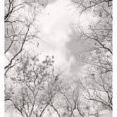 Fototapete Baumkronen im Himmel