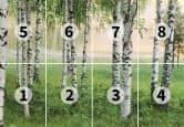 Fototapete Papiertapete Nordischer Wald