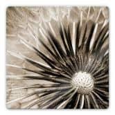 Glasbild Pusteblumen-Poesie - quadratisch