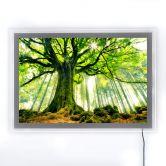 LED-Wandbild - Kiciak - Märchenwald