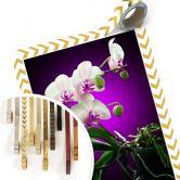 Poster Blütenpracht einer Orchidee