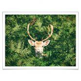 Poster mit Bilderrahmen Versteckspiel im Wald