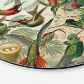 Wandcirkel Haeckel - Kolibries