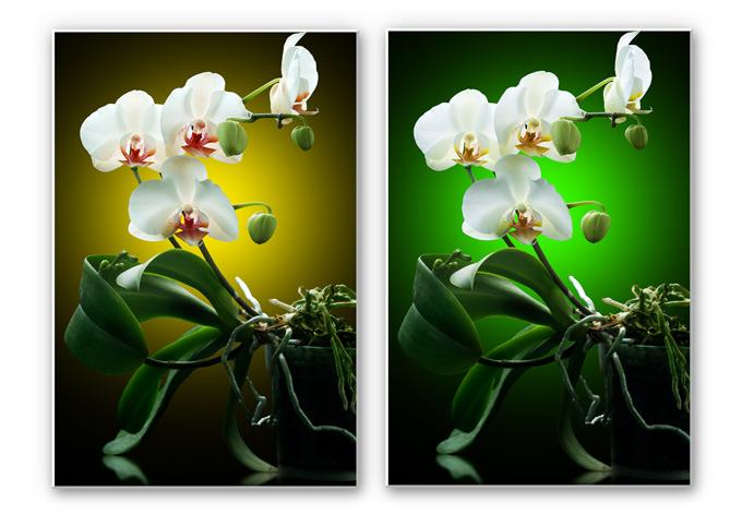 tableau forex beaut florale d 39 une wall. Black Bedroom Furniture Sets. Home Design Ideas