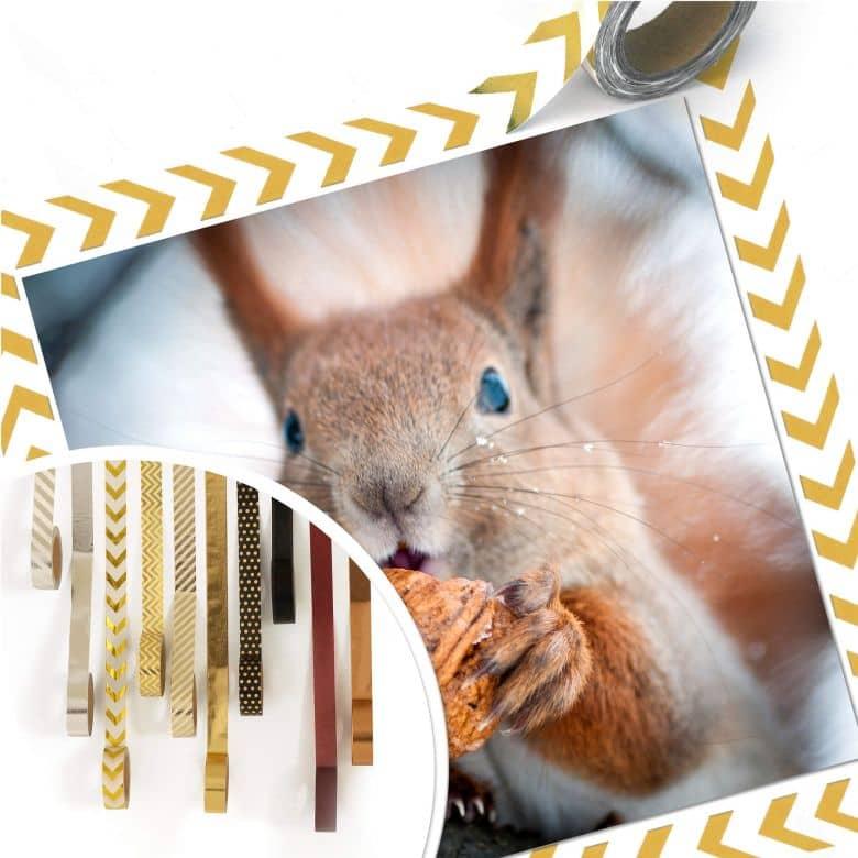 poster eichhörnchen mit nuss  wallartde