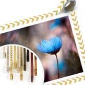Poster Bravin - Tanzende Blumen