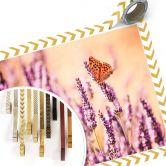 Poster Colombo - Der Schmetterling im Lavendel