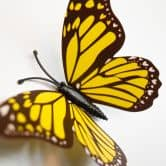 Adesivi Farfalle Gialle 3D – set di 12 pezzi