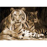 Fototapete Zwei Königstiger