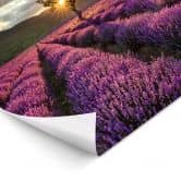 LED-Wandbild - Lavendelblüte in der Provence