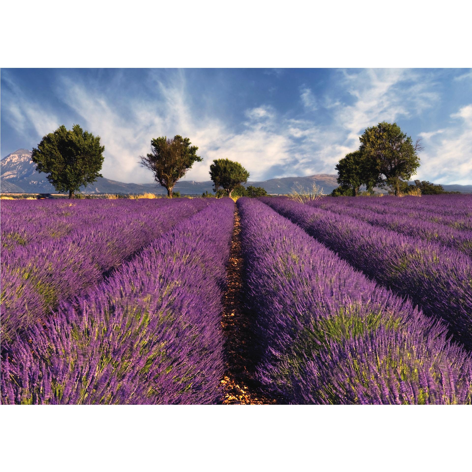 Fototapete Lavendelfeld - Landschaft in Südfrankreich | wall-art.de