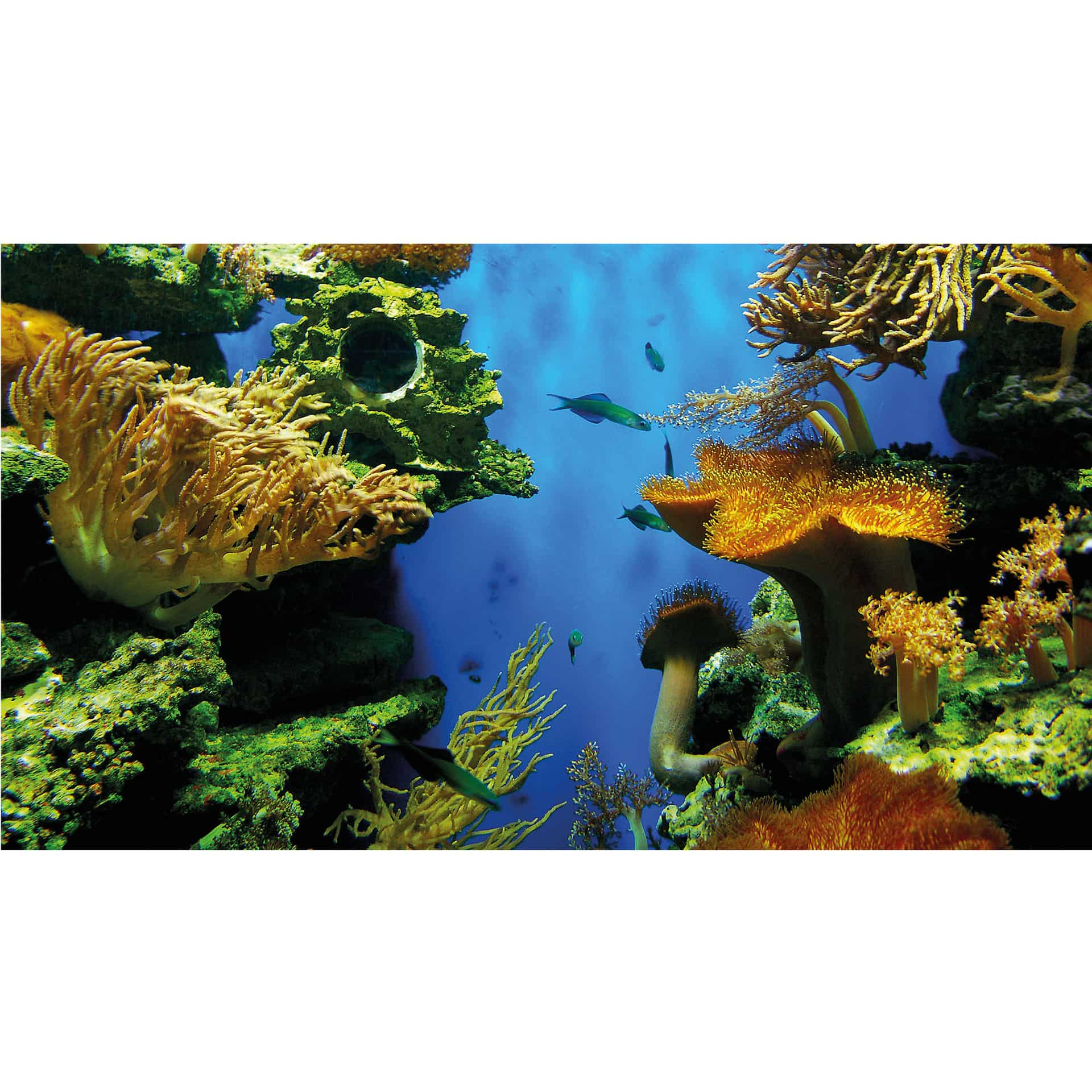 Coral Reef Background: Photo Wallpaper