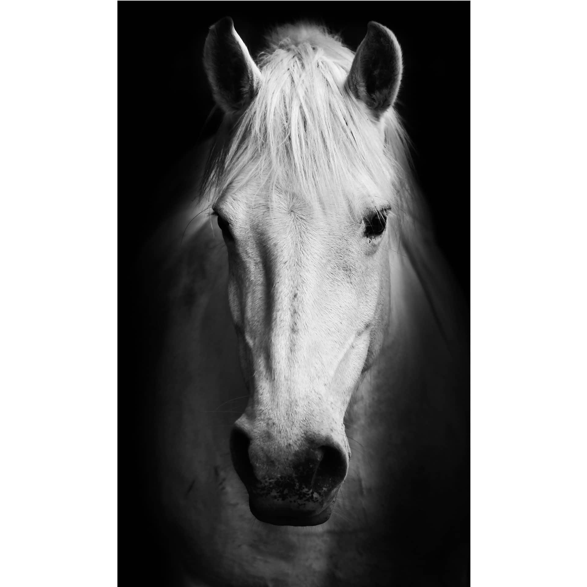 fototapete white horse gro fl chige wanddekoration f r zuhause von k l wall art wall. Black Bedroom Furniture Sets. Home Design Ideas