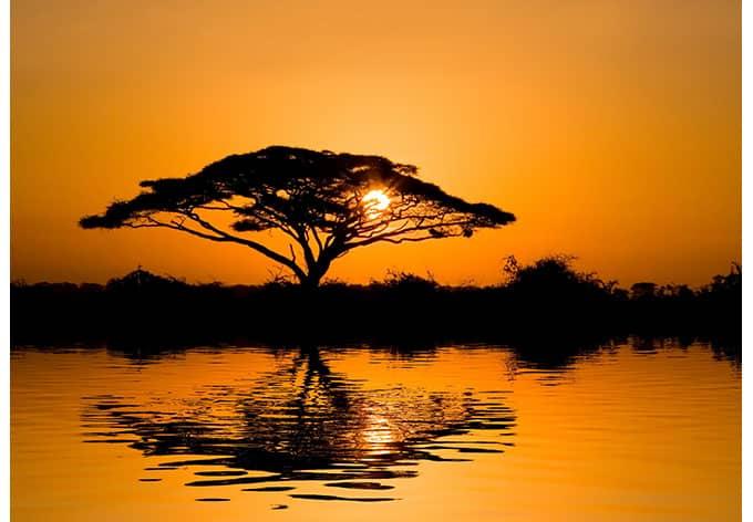 Fototapete Afrika - afrikanische Savanne im ...