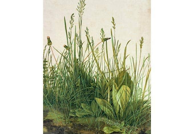 Selbstklebende Tapete Gras : Kunstdruck Fototapete Albrecht D?rer Das gro?e Rasenst?ck als